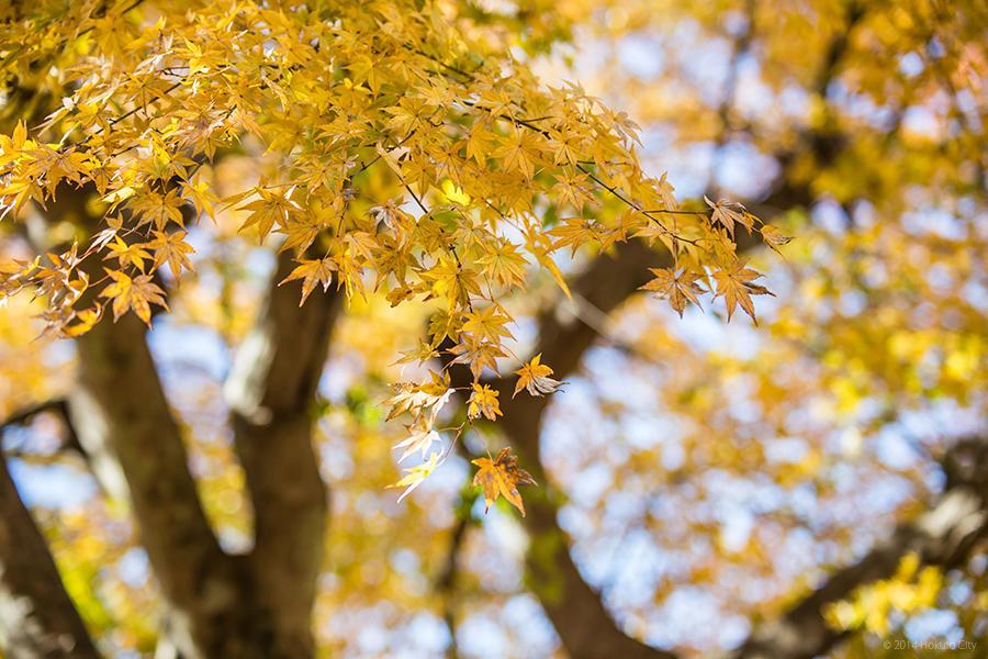 06.長澤の鯉のぼりと花の森公園 10