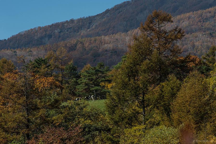 09.東沢大橋とまきば公園からの景観 17