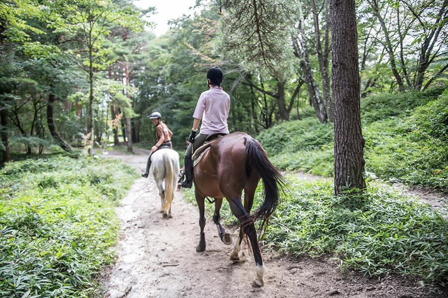 13.馬と高原 04