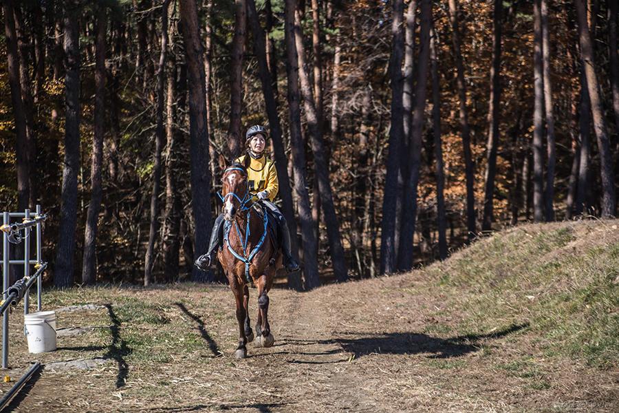 13.馬と高原 11
