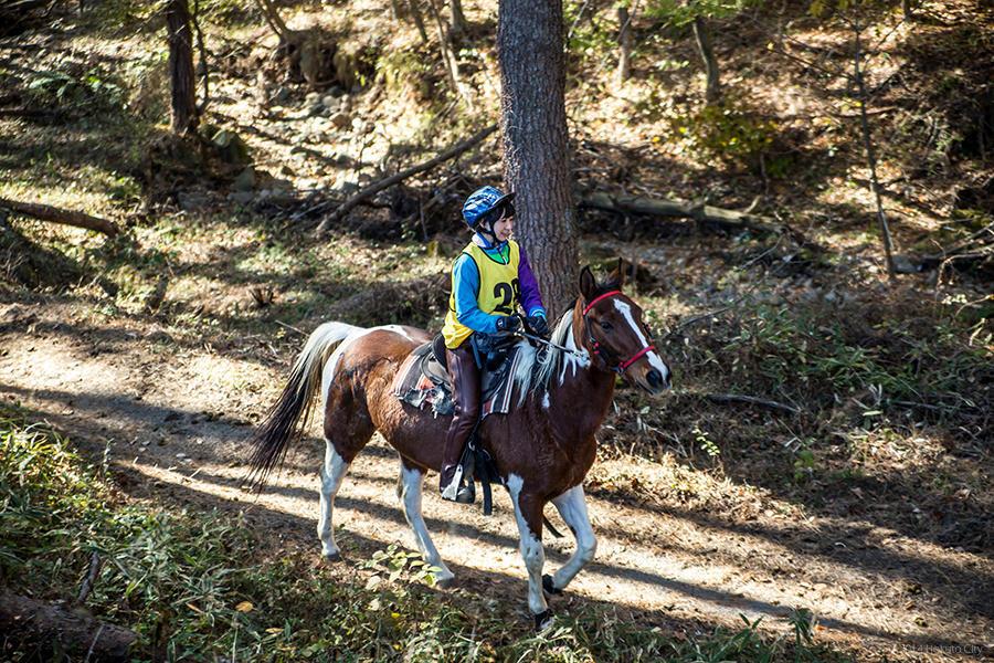 13.馬と高原 12