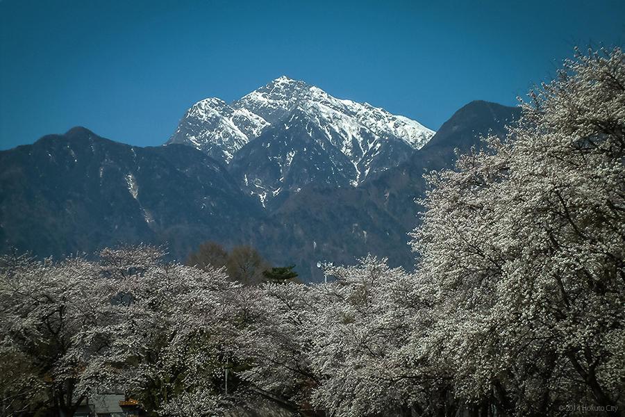 22.山高神代桜と眞原の桜並木 04