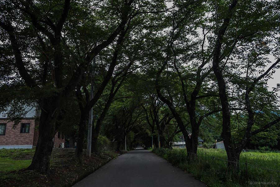 22.山高神代桜と眞原の桜並木 05