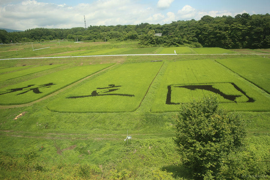 稲絵アートフェスティバル 02