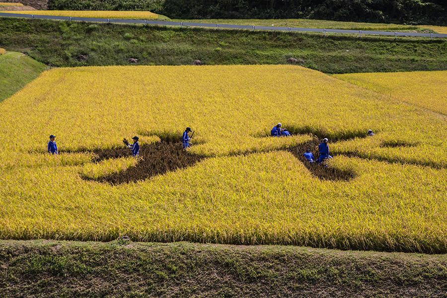稲絵アートフェスティバル 12
